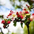 Ağaç Çiçekleri