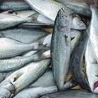 Balık Yemek