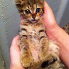 Kedi Sevmek