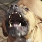 Köpek Saldırısına Uğramak
