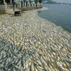 Ölmüş Balık