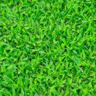 Yeşillik Almak