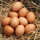 Yumurta Toplamak